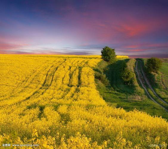 El valor de la agricultura; tipos de agricultura: extensiva, intensiva o industrial, biológica, parcelaria, monocultivo.