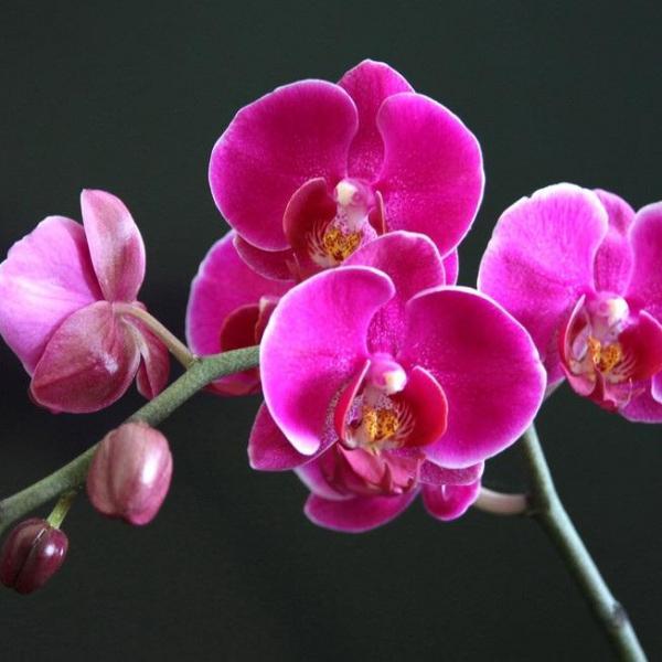 花言葉|「永遠の愛」を伝える愛の花言葉を持つお花