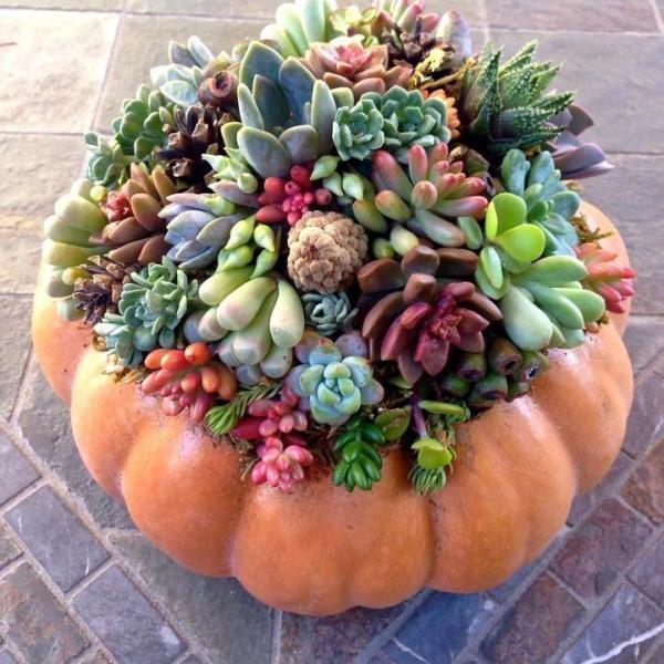 Cactus: cómo extraer púas de la piel