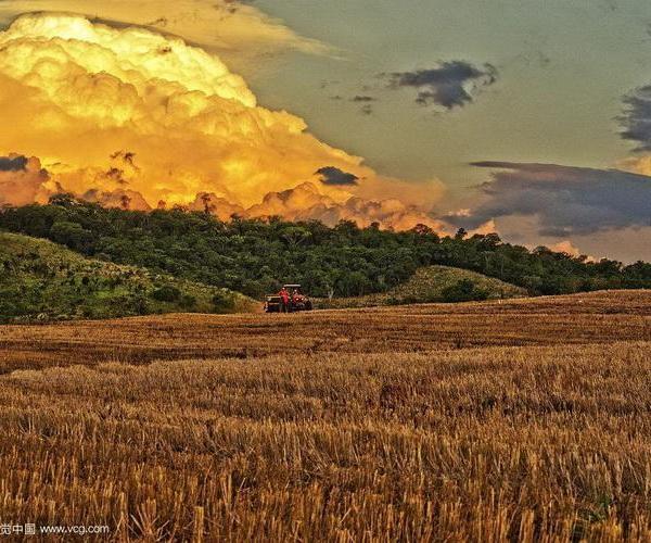 La agricultura moderna: introducción, química agrícola, mejora vegetal.