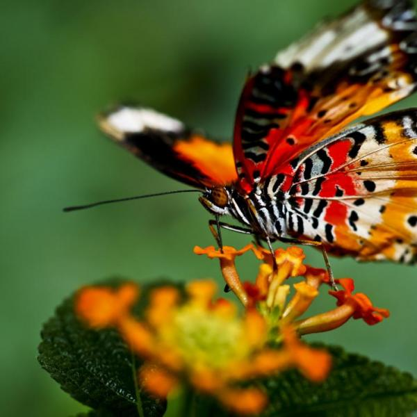 How To Make A Butterfly Container Garden   Making A Butterfly Garden