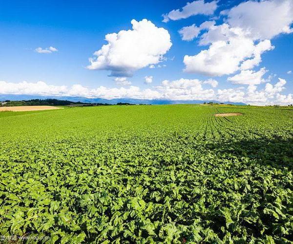 La agricultura moderna (continuación): técnicas hidropónicas, mecanización, procesado y conservación. La industria agrícola.