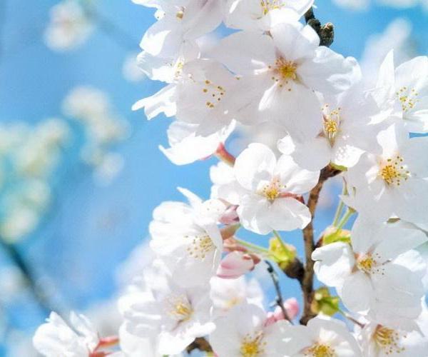 简单七招拍出不一样的花卉人像