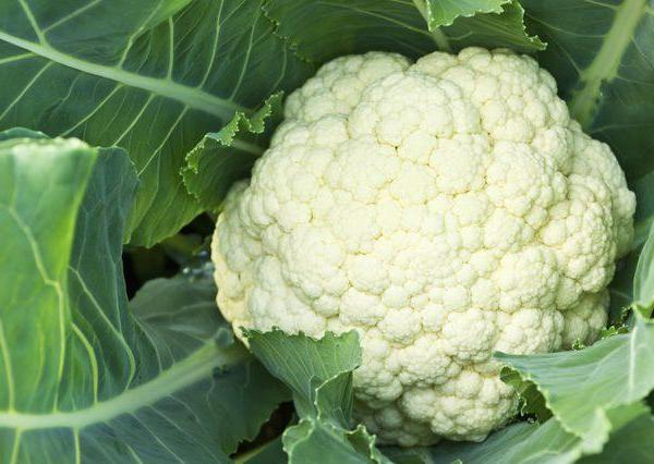 Can Broccoli & Cauliflower Survive Freezing Temperatures in a Garden?