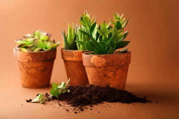 装修完的新家应该摆这些植物