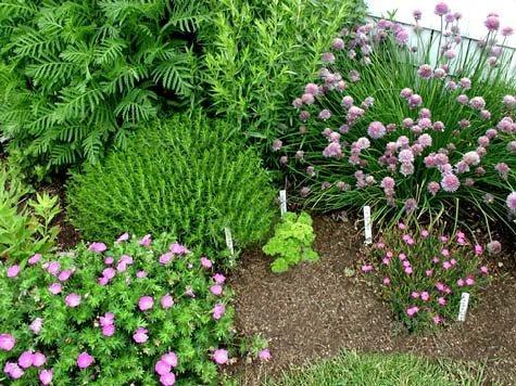 Growing Evergreen Herbs: Information On Evergreen Herbs To Plant In Gardens