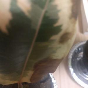 """제가 새로운 식물 """"green""""한 그루를 나의 """"화원""""에 옴겼어요."""
