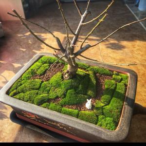 """我新添加了一棵""""梅花""""到我的""""花园"""""""