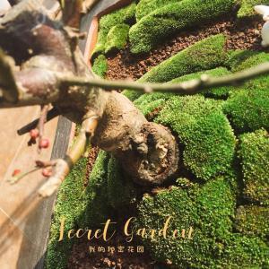 苔藓宝宝们早日成活 茁长成长啊
