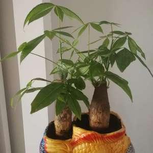 """我新添加了一棵""""小发财树""""到我的""""花园"""""""