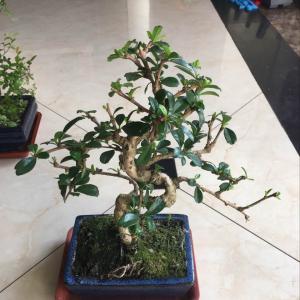 """我新添加了一棵""""茶树""""到我的""""花园"""""""