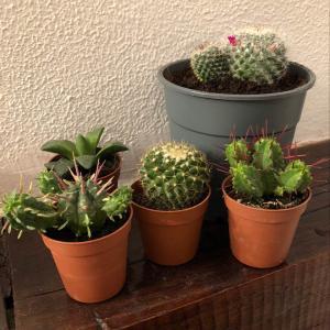 I Nuevo agregado un Cactus en mi jardín
