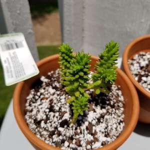 I now added