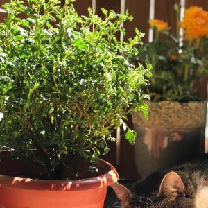 """我新添加了一棵""""小木槿""""到我的""""花園""""。"""