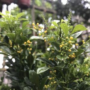 黄色的是小花吗