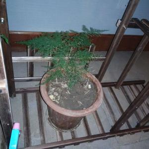 """我新添加了一棵""""文竹""""到我的""""花园"""""""