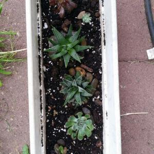 Variety Pots