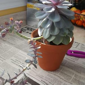 big plant before and after, and baby