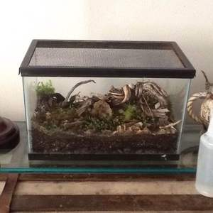 Finally able to display my terrariumsi around my house