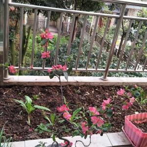 """我新添加了一棵""""海棠""""到我的""""花园"""""""