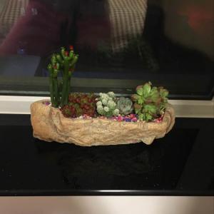 """我新添加了一棵""""多肉植物""""到我的""""花园"""""""