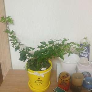 """제가 새로운 식물 """"아라""""한 그루를 나의 """"화원""""에 옴겼어요."""