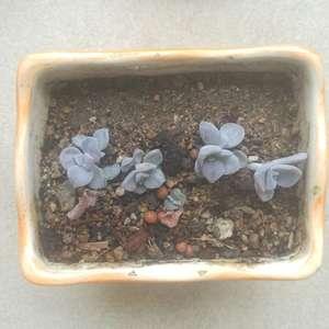 """제가 새로운 식물 """"진선 진실 진심 진솔""""한 그루를 나의 """"화원""""에 옴겼어요."""