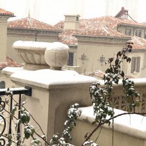 终于下雪了