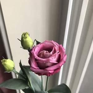 2018-6-5 初花