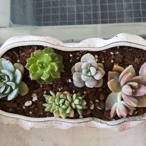 """我新添加了一棵""""组合(月亮仙子+蒂亚+马库斯+艾伦+铭月)""""到我的""""花园"""""""