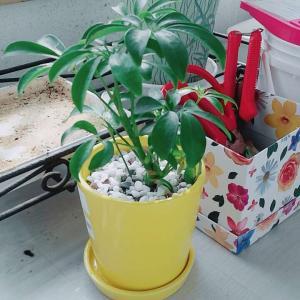 """제가 새로운 식물 """"콩콩이""""한 그루를 나의 """"화원""""에 옴겼어요."""