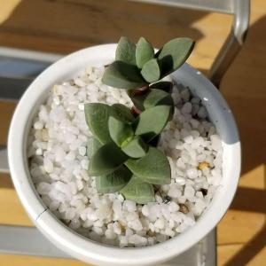 growing :D
