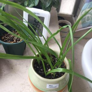 今年种韭菜,明年看花花