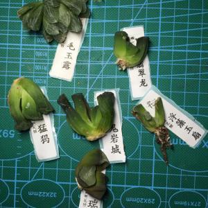 A-2016-9各种收花收肉记录