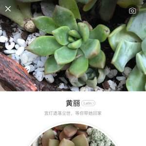 """我新添加了一棵""""黄丽""""到我的""""花园"""""""