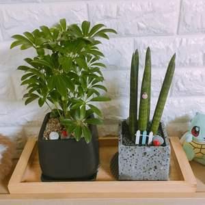 """제가 새로운 식물 """"홍콩야자""""한 그루를 나의 """"화원""""에 옴겼어요."""
