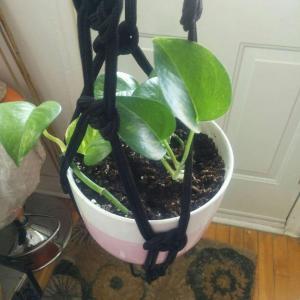 new pot!