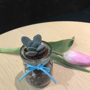 """我新添加了一棵""""小夜衣Crassula tecta——景天科青锁龙属,原产非洲南部。多年生、肉质植物,喜生于干地或石上;叶互生、对生或轮生,常无柄,单叶,稀为羽状复叶;花通常两性,稀单性,辐射对称,单生或排成聚伞花序;萼片与花瓣同数,通常4-5;合生;雄蕊与萼片同数或2倍之;雌蕊通常4-5,每一个基部有小鳞片1枚;子房1室,有胚珠数至多颗;果为一蓇葖果,腹缝开裂。""""到我的""""花园"""""""