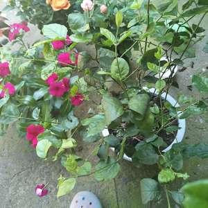 """我新添加了一棵""""茉莉花""""到我的""""花园"""""""