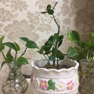 """我新添加了一棵""""长寿花""""到我的""""花园"""""""