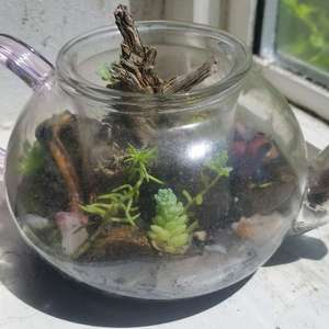 so the mini pot broke and my aunt really wanted a teapot terrarium o.o this is the end result