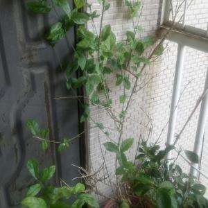 """我新添加了一棵""""茉莉花""""到我的""""花園""""。"""