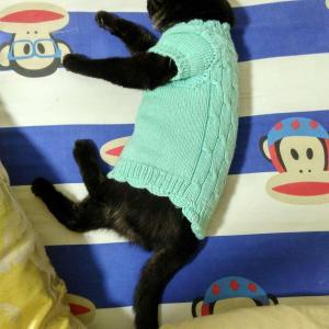 老妈给打的毛衣很符合这个小娘炮的气质呢…😁