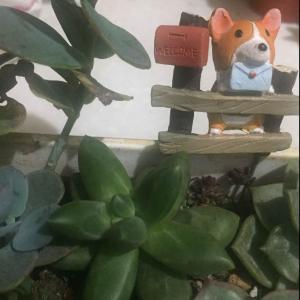 """我新添加了一棵""""千代田之松""""到我的""""花園""""。"""