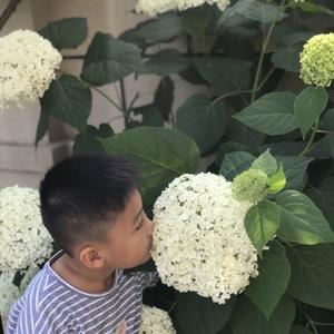 花型真心很大!好看!看到花孩子总想闻一闻,一点点美中不足——没什么香味儿