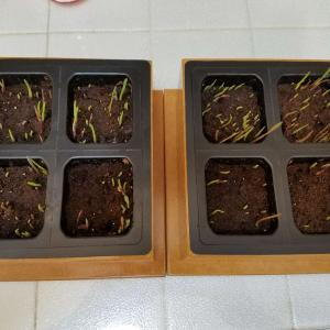 Day 5, on 05.15.18. Left is Box 1, Right is Box 2. 😄🌱