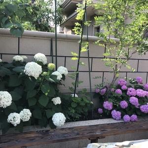 妈妈超极喜欢这两丛花
