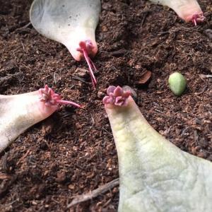 Succulent Props