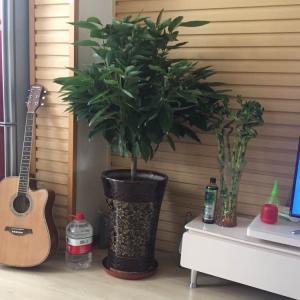 """我新添加了一棵""""发财树""""到我的""""花园"""""""